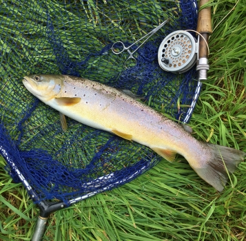 Over wintered sea trout ?